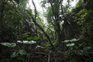 沖縄の急な雨でも楽しめるアクティビティ6選!の画像