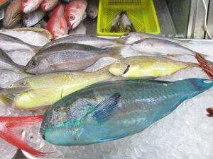 釣り初心者必見!!沖縄で手ぶら釣り体験!の画像
