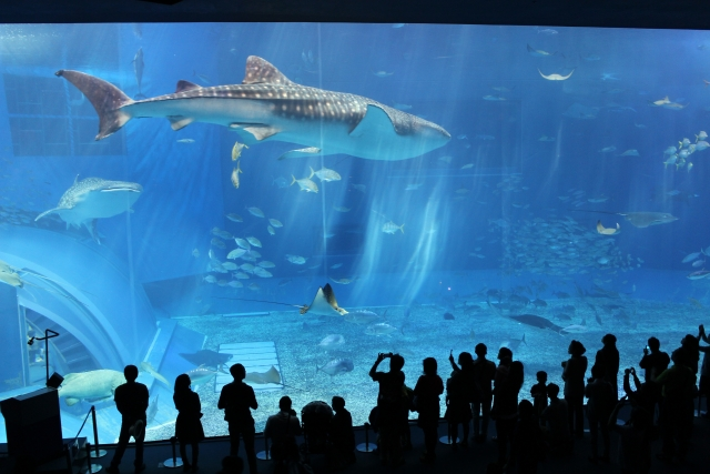 Churaumi Aquarium.png