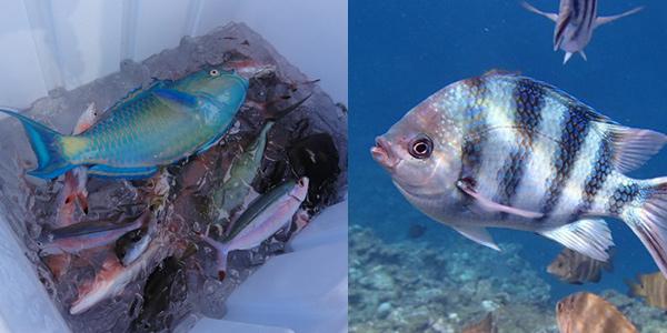 沖縄の海のカラフルな魚