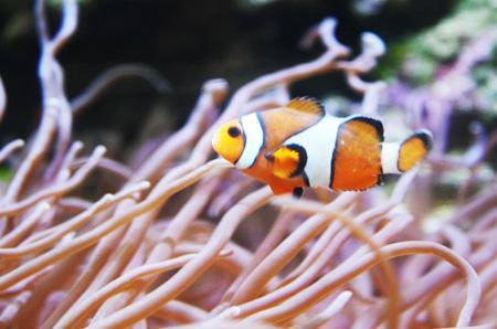 カラフルな魚に会える!